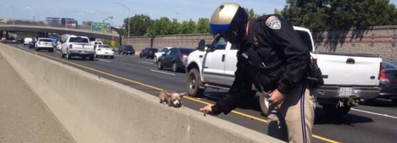 Polícia salva cão abandonado em autoestrada.