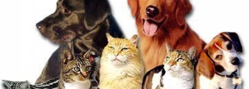 Vereadores de Balneário Piçarras aprovam criação de fundo de proteção para coibir maus tratos a animais