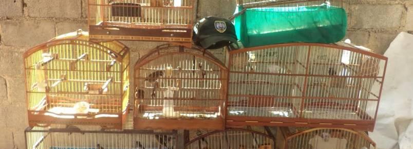 Quase 20 pássaros silvestres sem registro são apreendidos em Linhares
