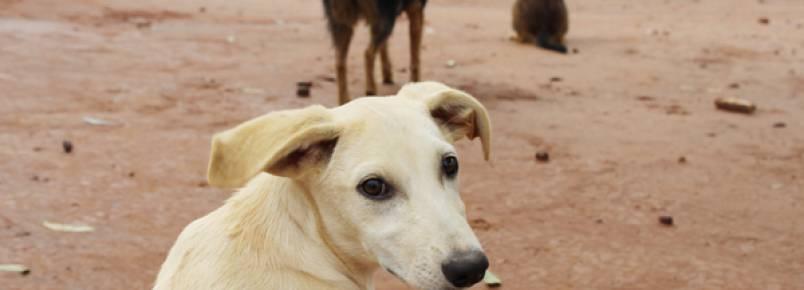 ONG realiza trabalho de conscientização contra maus tratos à animais em Artur Nogueira