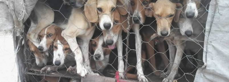 PRF apreende 32 cães que eram transportados em condições de maus tratos