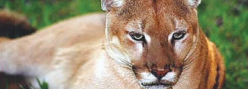 ONG quer criar abrigo de animais silvestres