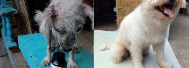 Fotos mostram a incrível recuperação de cão resgatado por abrigo