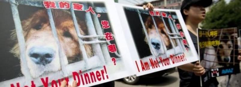 Ativistas querem acabar com Festival de Carne de Cachorro na China