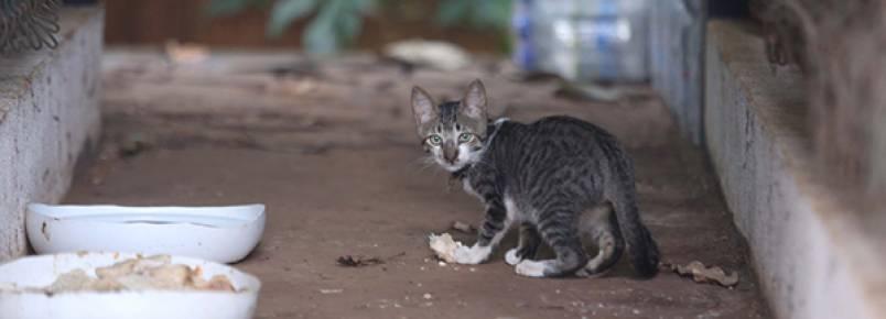 Uberlândia tem cerca de 8 mil gatos de rua, segundo APA