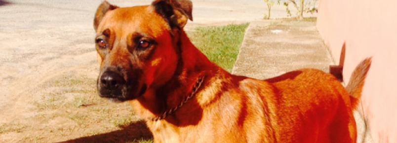 Cães e gatos podem ser adotados em Embu das Artes