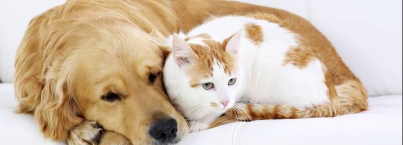 Saiba o que fazer quando seu cão ou gato tem convulsão