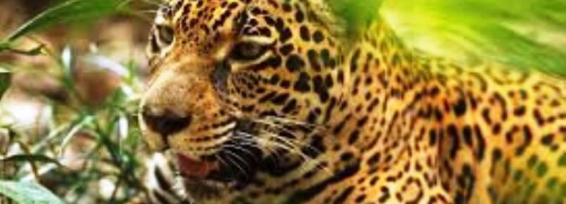 Prefeitura firma parceria com Associação Mata Ciliar para tratamento de animais silvestres