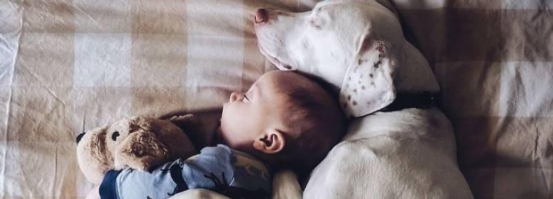Mães faz ensaio com filho e animais resgatados para incentivar adoção