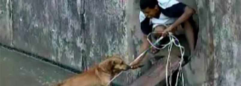 Jovem arrisca vida para resgatar cachorro que caiu em canal na capital baiana