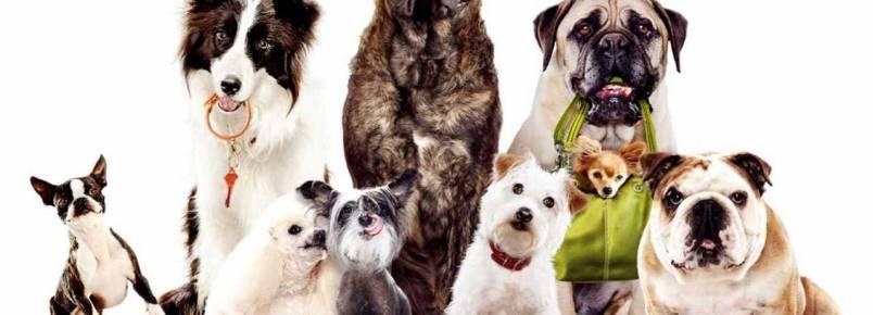 Venda de animais vai exigir preenchimento de termo de posse responsável em Valinhos