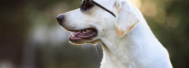 12 cuidados essenciais que é preciso ter ao levar um cachorro para passear
