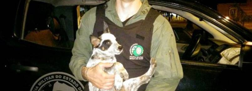 Graer recupera cachorro após roubo