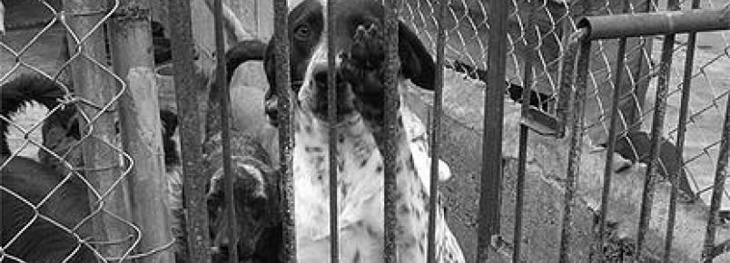 ONG resgata animais de protetora falecida e precisa de ajuda para continuar seu trabalho