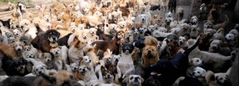 Chinesa recolhe 1.500 cães e 200 gatos de rua
