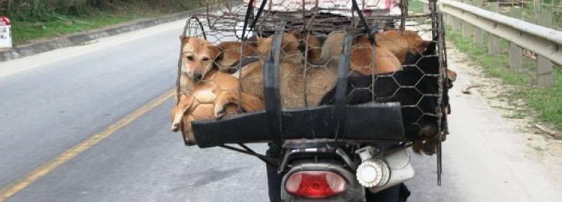 Nove regiões do mundo ainda consomem carne de cães e gatos