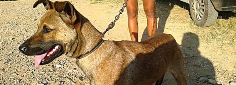 Monte Mor vai promover '1ª Feira de Doação de Animais' .