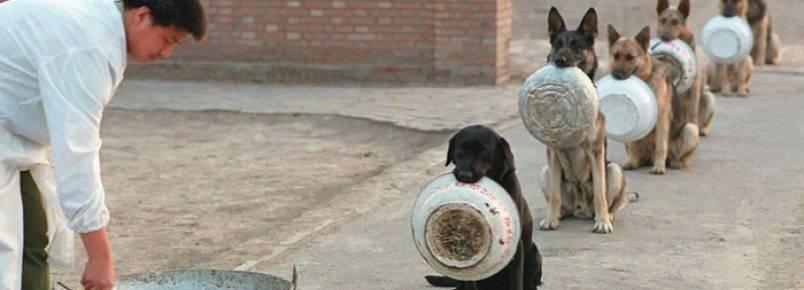 Disciplina de cães policiais na hora de comer surpreende