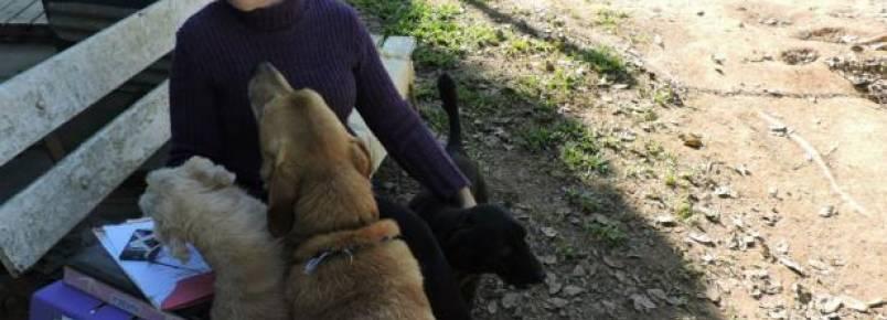 Voluntária precisa doar 42 animais em Nova Santa Rita