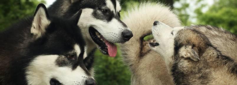 É verdade que os cães entendem que fazem parte da mesma família?