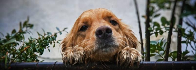 Como evitar que o cachorro fuja pra rua