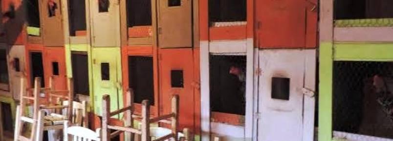 Polícia Militar Ambiental flagra rinha de galo no Extremo-Oeste