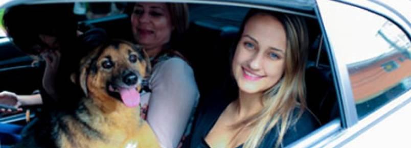 Uber incentiva a adoção de cães em ação inédita