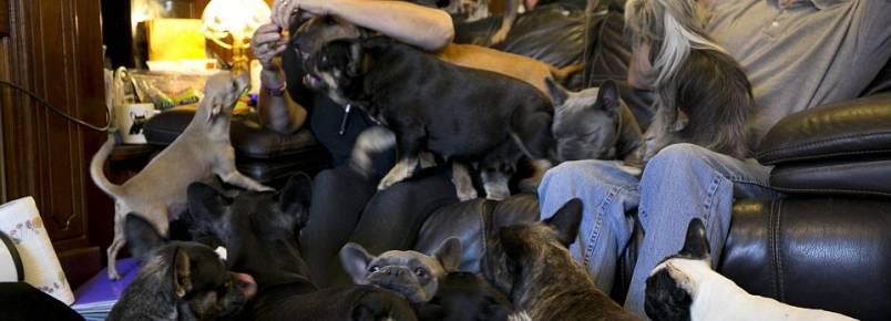 Casal revela as dificuldades que enfrenta para cuidar de seus 41 cães