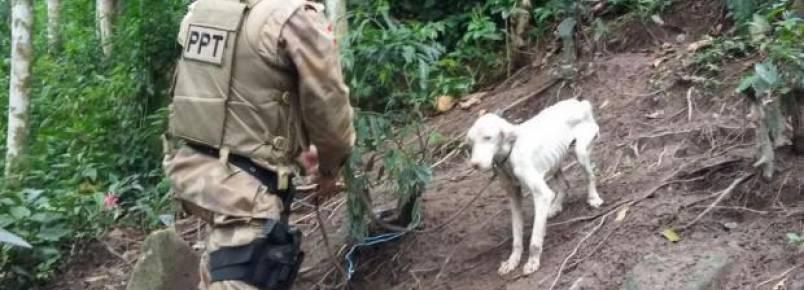 Cachorro em estado de desnutrição é encontrado pela PM em Itapema