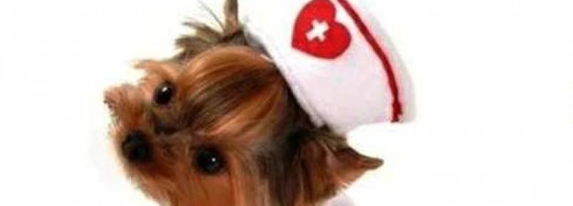 Roupinhas Baby Pet Wear já é um sucesso em Itabira, MG