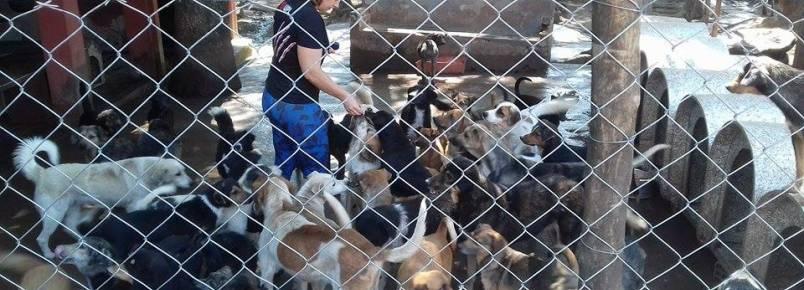 ONG com 208 animais está à beira da falência