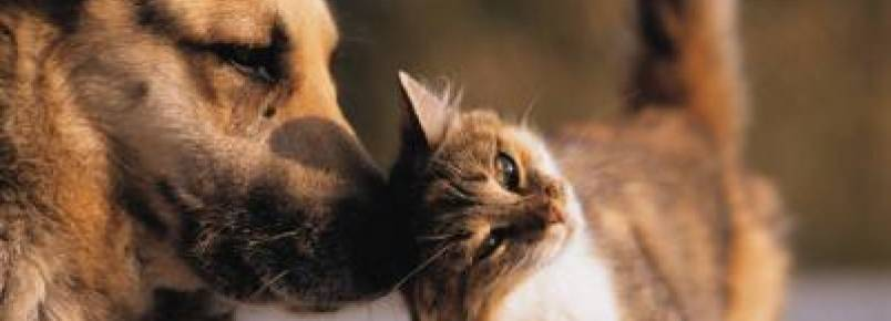 OAB entra com ação para criação de Programa de Proteção a Animais