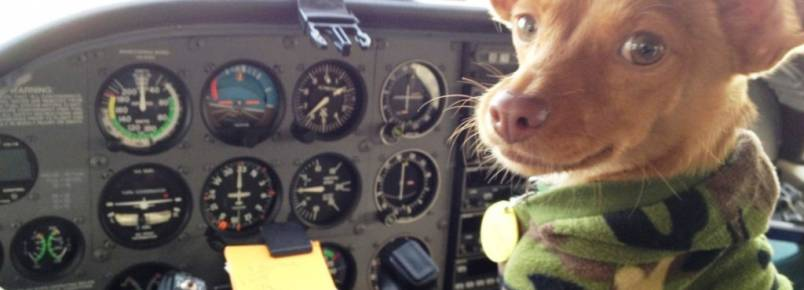 Grupo de resgate voa pelos EUA para salvar vidas de cães
