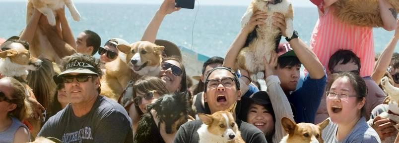 Evento reúne mais de 600 cães da raça corgi em uma praia da Califórnia
