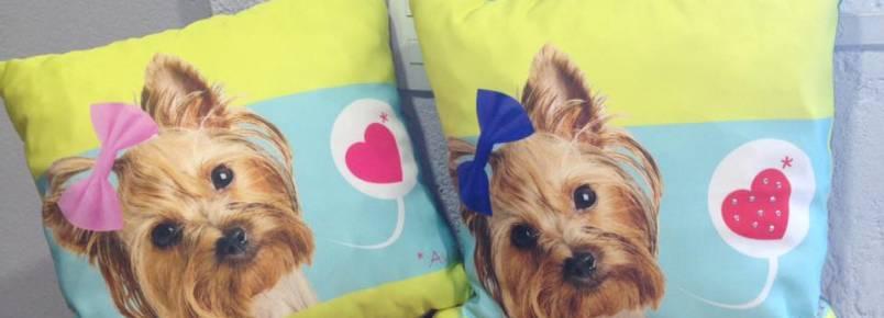 Quer ganhar estas almofadinhas e este colchonete para cães?