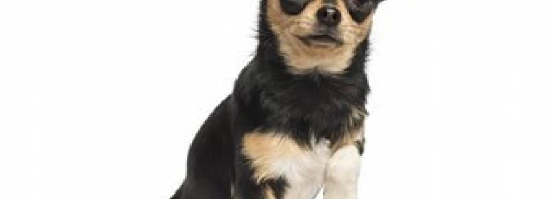 3 problemas que podem deixar o seu cão mancando