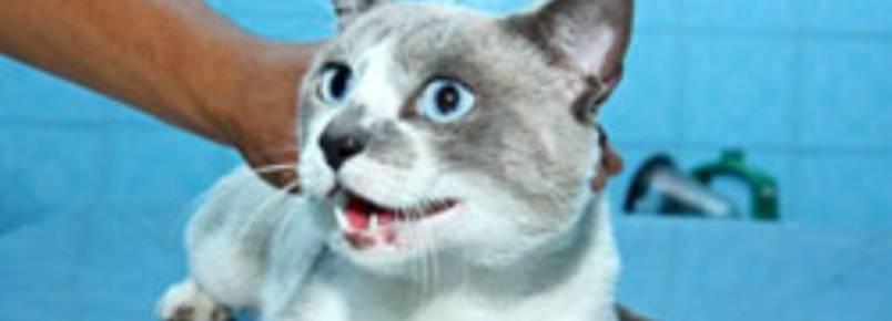 """""""O Melhor Amigo do Homem"""" recolhe gato abandonado"""
