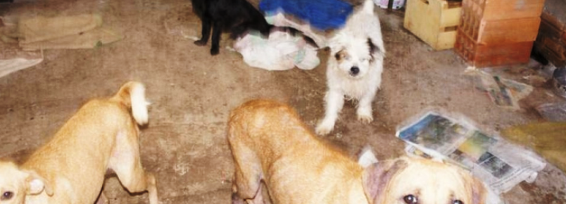 Mulher recolheu mais de 80 cães abandonados