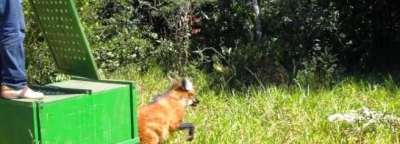 Animais silvestres são soltos no Recanto Ecológico Rio da Prata