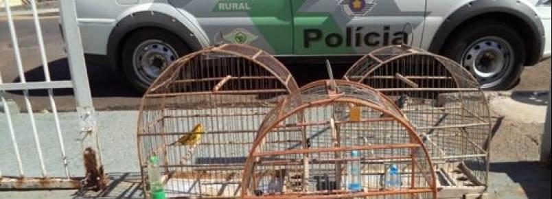 POLÍCIA AMBIENTAL REALIZA OPERAÇÃO E MULTA INFRATORES