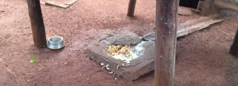ONG faz denúncia sobre falta de cuidados com os animais do Zoológico