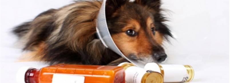 """ONG promove """"vaquinha"""" para medicar mil gatos e cachorros"""