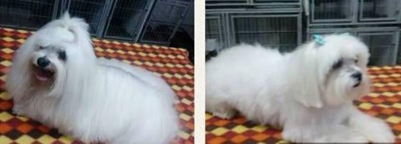 Resumo da semana dos lindos cãezinhos na Clinvet