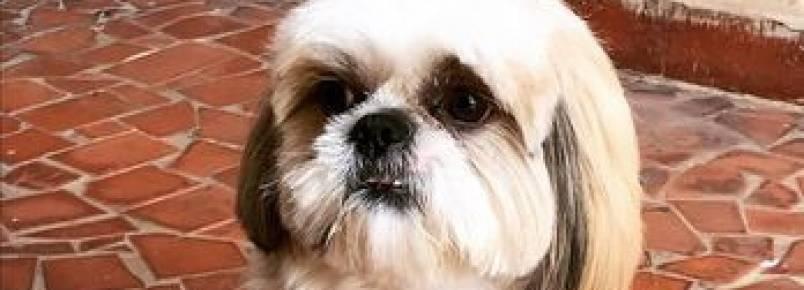 Fofura: cachorro avisa que fez cocô e vídeo viraliza na internet