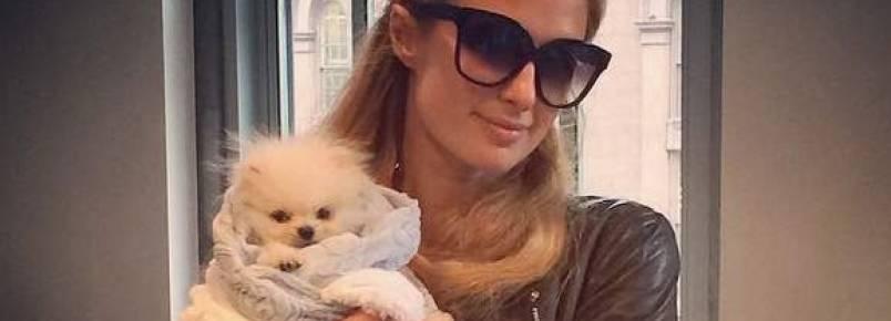 Paris Hilton paga R$ 29 mil em cachorro e enfurece a PETA
