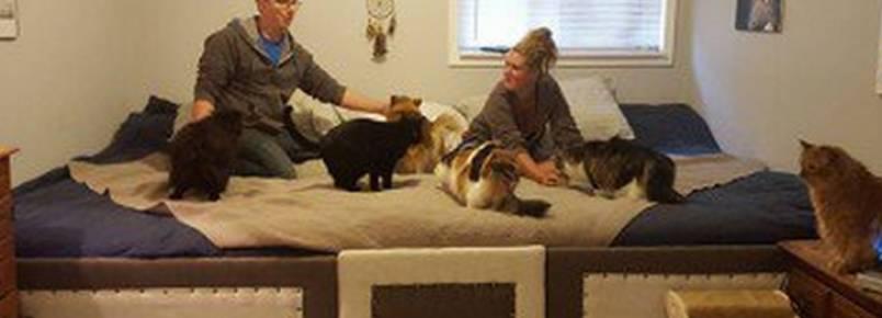 Casal constrói cama maior para abrigar todos os seus pets