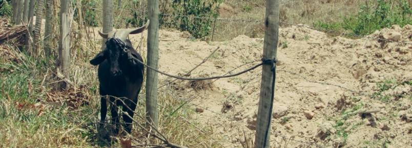 COVARDIA: Animal amarrado sem água no sol quente no Morro Escuro , em Santa Maria de Itabira, MG