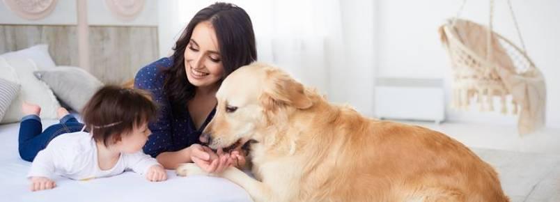 Relação entre bebê e cão: confira dicas para uma integração ideal