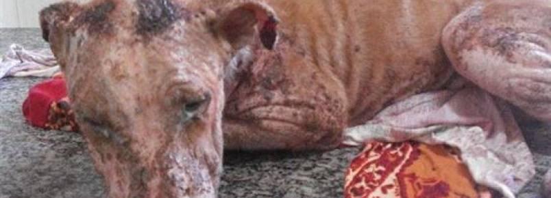 Ação da polícia e Afocato evitam que cachorro seja enterrado vivo
