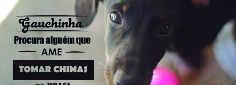 ONG hospeda mais de 400 animais para adoção